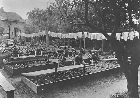 Dzieci z domu sierot pracują w ogródku