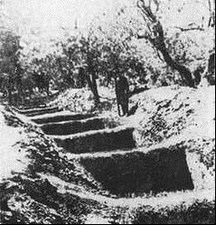 Jedno z miejsc, gdzie komuniści chowali ofiar - owocowy sad przy Lityńskiej Szosie
