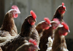 Zdjęcie pobrano z http://k.img.com.ua