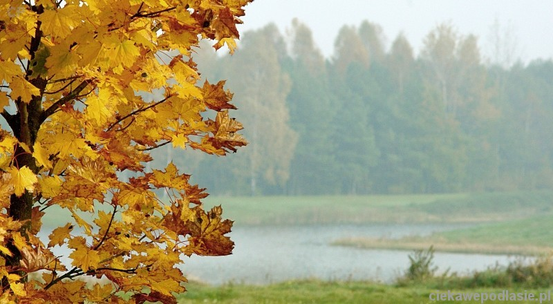 Zdjęcie pobrano z www.ciekawepodlasie.pl